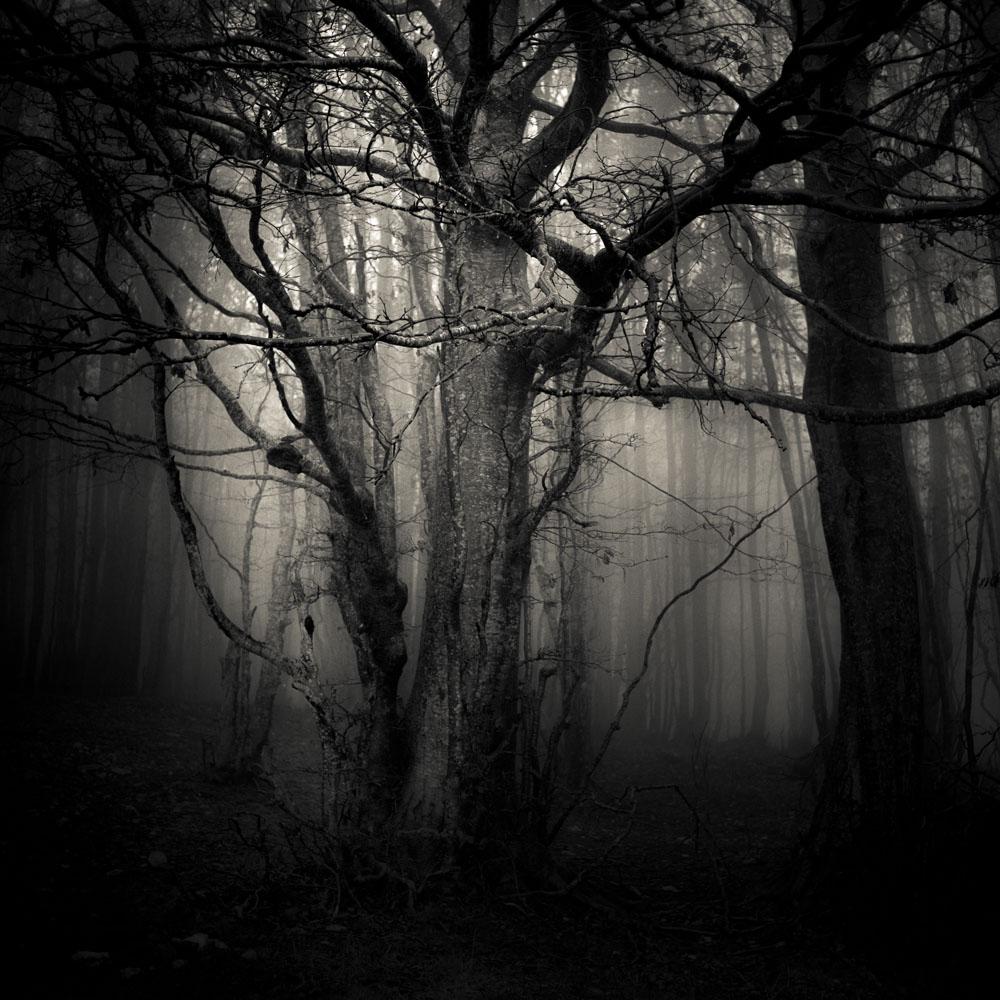 Portfolio Forest II