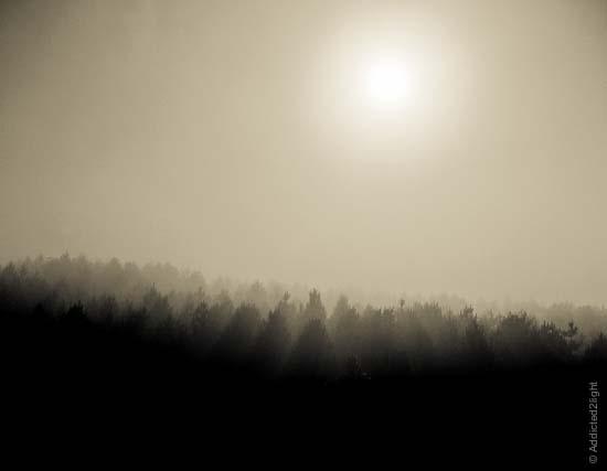 Mist on Pino Collito