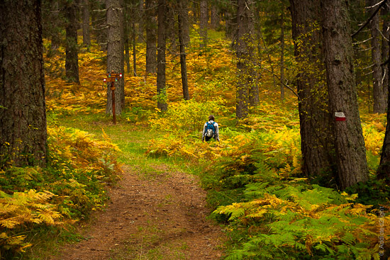 Autumn in the woods near Lorica