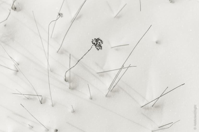 Nikon d3200 + 18-55 vr II - grasses in the snow