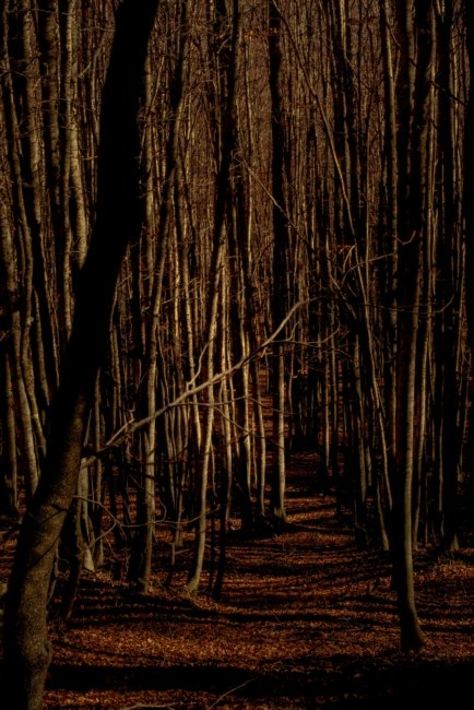 11-Little_red_riding_hood_forest