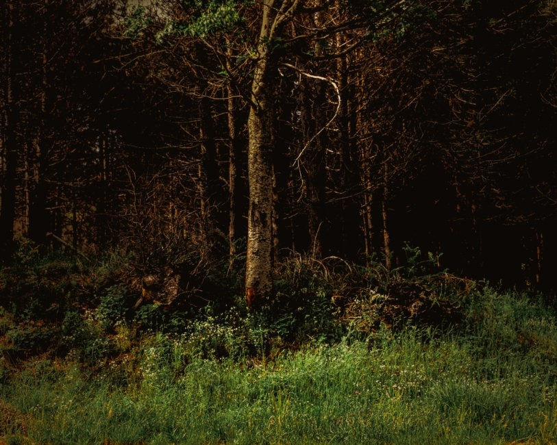 4-Forest-outskirts